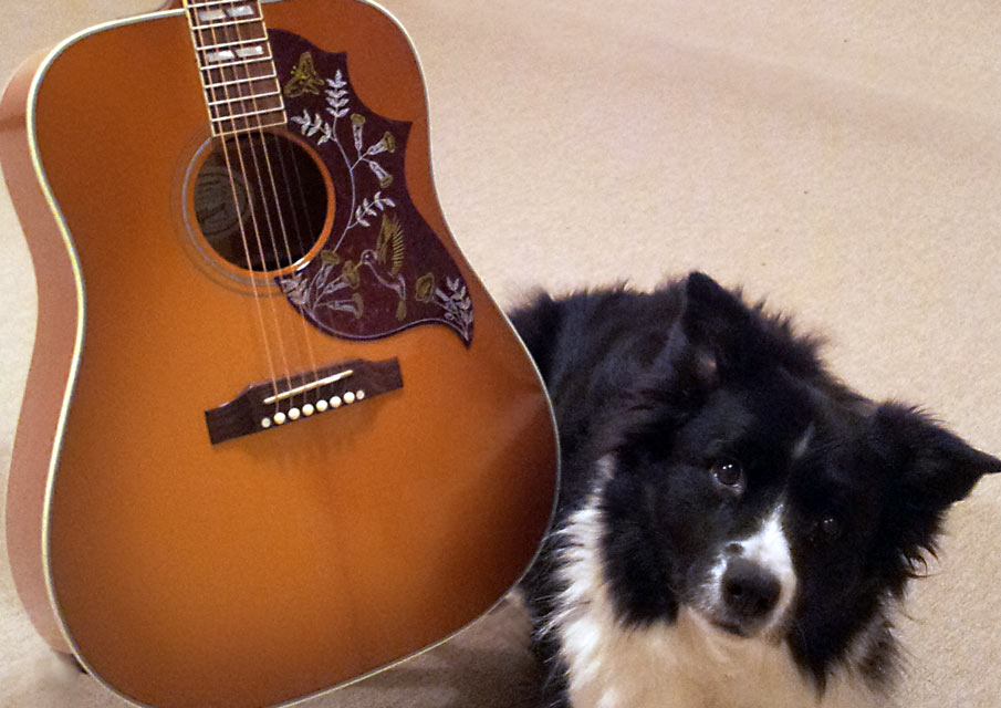 GuitarplusDog